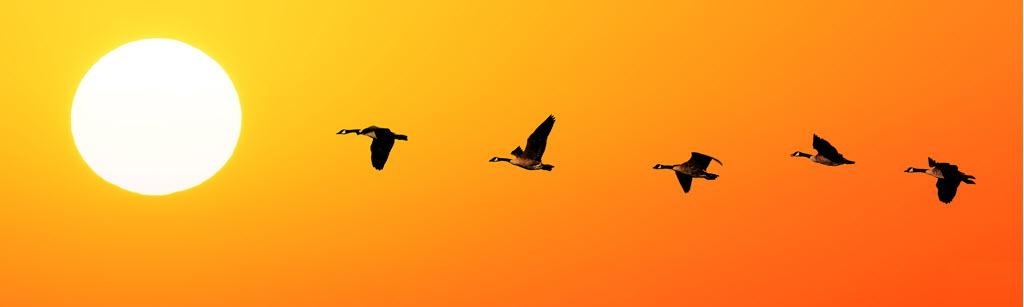 qaddress Migration Server