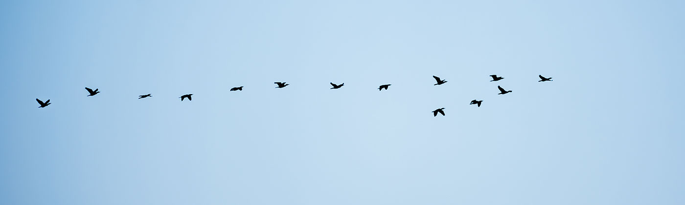 Stockfoto-Zugvögel